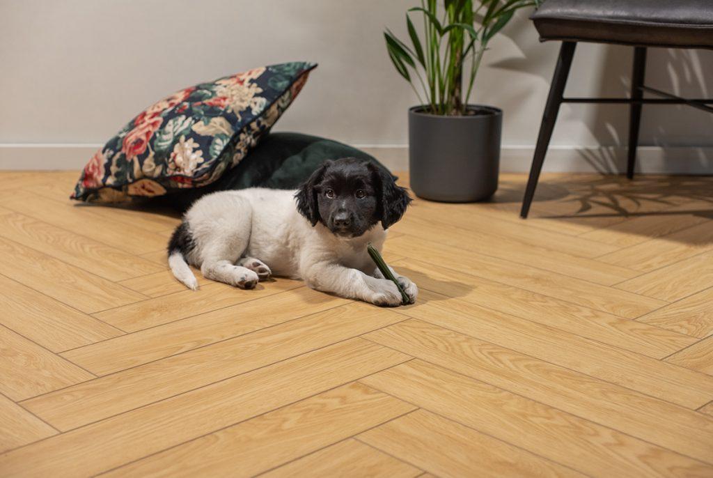 Floer-Visgraat-Click-PVC-Vloer-Eems-Natuur-Eiken-sfeer-front-puppy